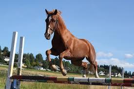 hest som hopper uten rytter